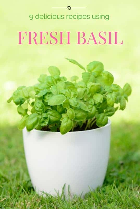 Uses for Fresh Basil | homemadeforelle.com