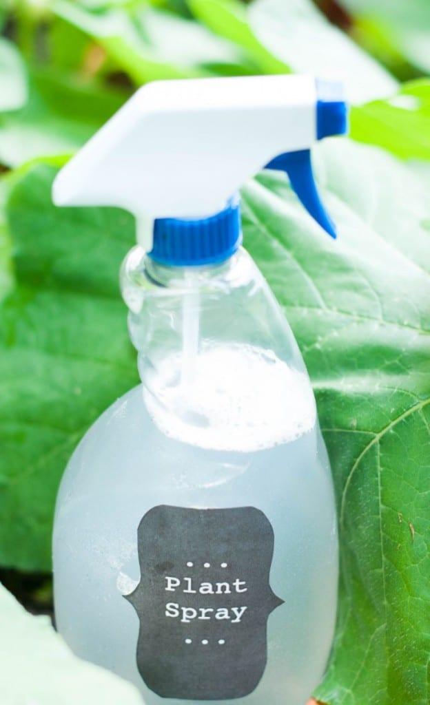 Plant Spray 1