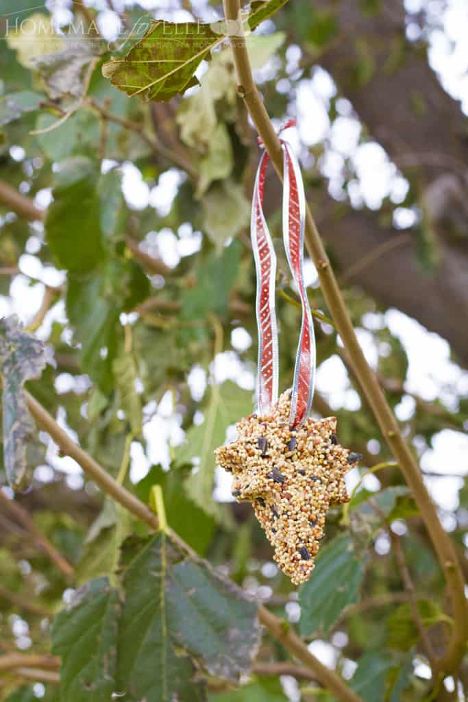 Outdoor Activities for Kids in the Winter | DIY Bird Seed Ornament
