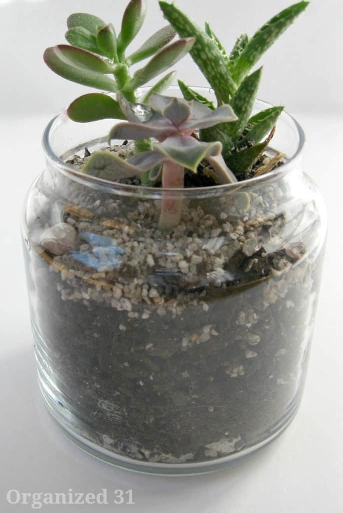Repurposed Candle Jar Planter - Homemade Christmas Gifts in a Jar