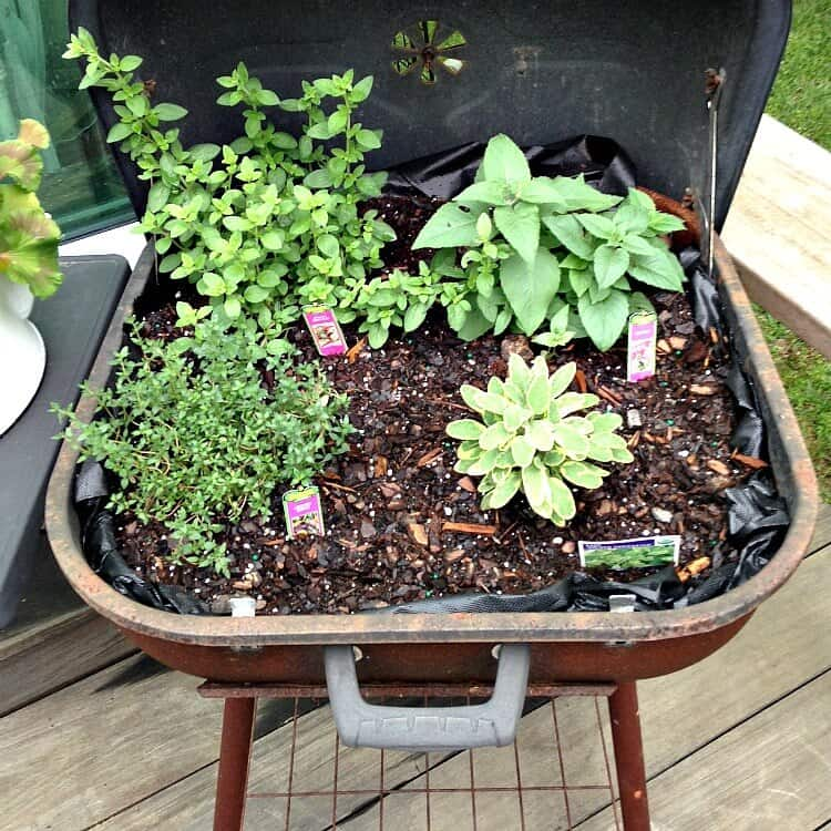 How to Turn a Grill into an Herb Garden