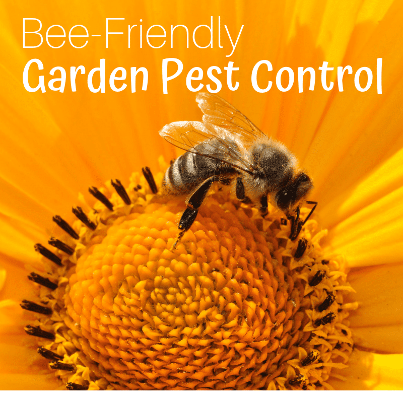 Bee-Friendly Garden Pest Control