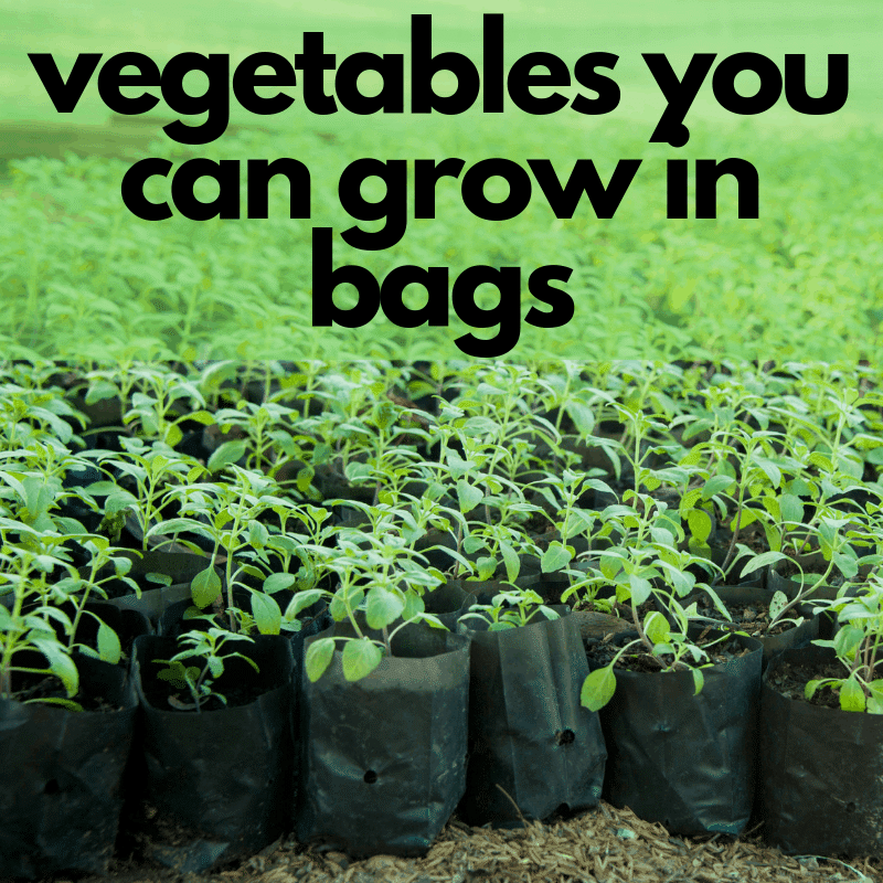 Best Vegetables To Grow In Raised Beds: Vegetables You Can Grow In Grow Bags ⋆ Homemade For Elle